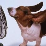 Consejos para tu aire acondicionado en verano
